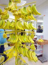 アイスランドでバナナが育つ!? アイスランドの地熱エネルギーに迫る (1 ...