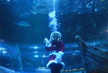 サンタガール(女性ダイバー)が魚たちに餌付けを行う アミューズメント事... 東京都・しながわ水