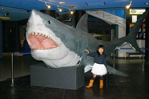 ドン(ムカシオオホホジロザメ ...