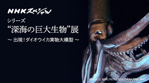 ダイオウイカの画像 p1_6