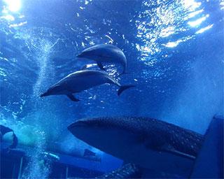 ちゅら 海 水族館 イルカ