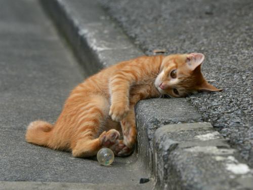 NAVER まとめ私達の大好きな、かわいい猫ちゃん! どうして、ねこはかわいいのか!? 猫の秘密を追…