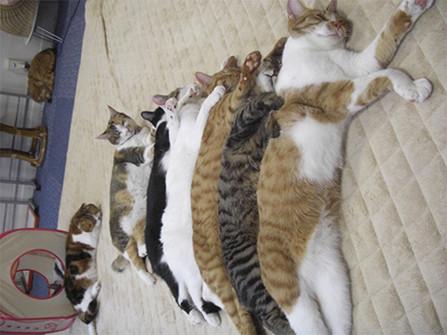 猫 - ライブドアブログ