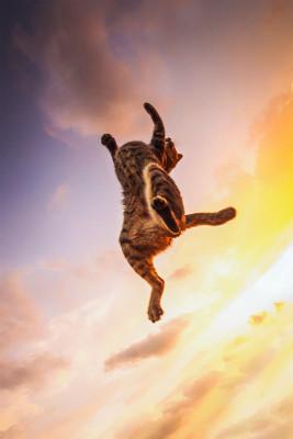 (C)『猫ジャンプ』/ワニブックス刊/撮影:間宮誠爾