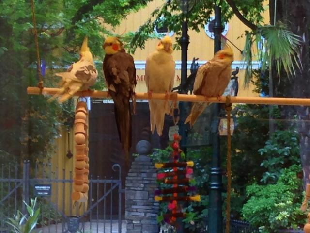 東京都のジブリ美術館前に「ことりカフェ吉祥寺」誕生! 店内には25羽の小鳥