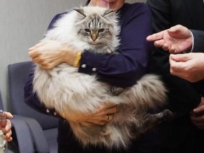 プーチン大統領から秋田県に贈られた猫「ミール君」は今\u2026