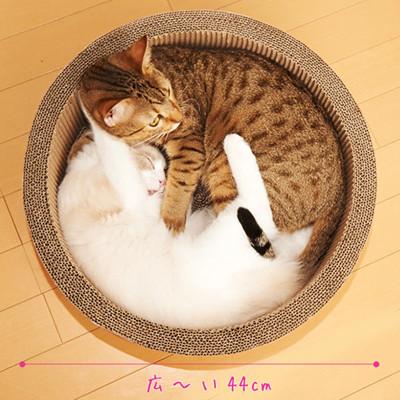 段ボール かじる 猫