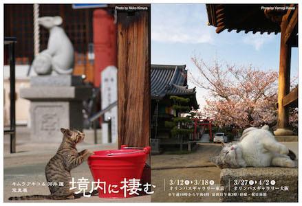 東京都千代田区で、寺社に住む猫たちの写真展が開催