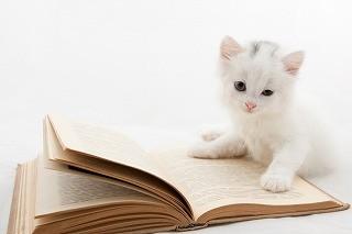 猫好きの侍と白猫の玉之丞が帰ってくる! 「猫侍 SEASON2」放送決定