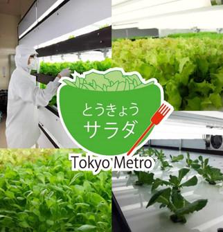 東京都メトロ東西線高架下で育った「とうきょうサラダ」発売–安定栽培可能