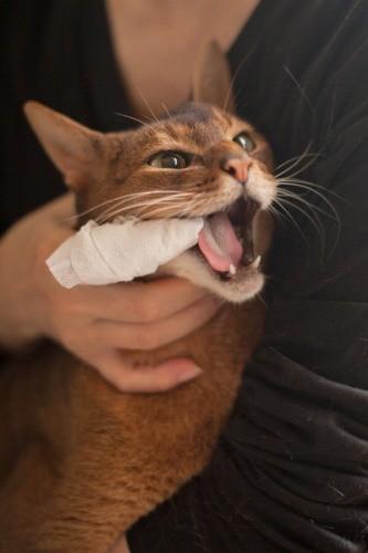 猫の歯磨きを実践してみた
