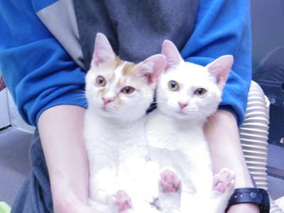 生身のニャンコがたくさん! 猫の譲渡会「仔猫祭りモンクレールジャパン 通販」が開催