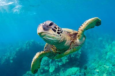 大モンクレール 2015 カタログ海原を旅するアオウミガメの映画を上映