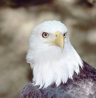 【レポート】V6岡田准一のかっこよさの秘密は「鳥顔」にあり - 顔の専門家が解説