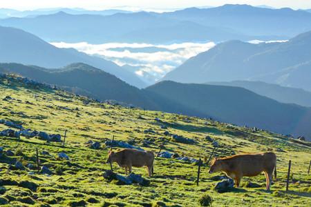 ここ本当に日本? 雲の上の町梼原町に年30万人の観光客が押し寄せる理由