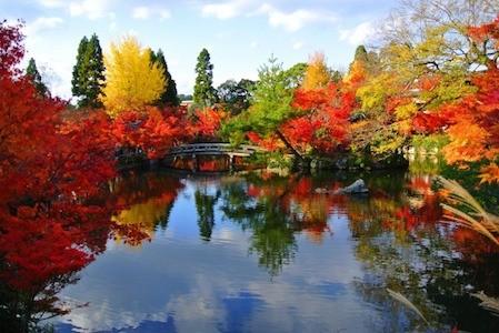 京都 紅葉 景色