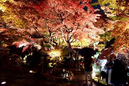 京都・嵐山は紅葉がよく似合う! 冬を前にした煌めきの世界をそぞろ歩き
