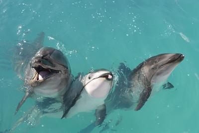 イルカの画像 p1_33