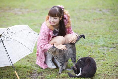 野良猫 と 仲良く なる 方法