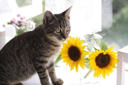 夏場、猫の飼育で気をつけることは? 獣医師が解説 | マイナビニュース