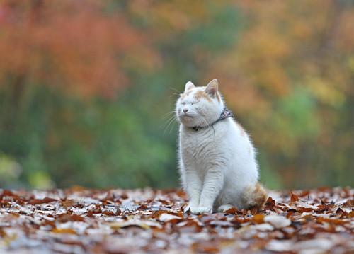 プロと「ネコ寺」へ!「癒やしの猫を撮る!」ツアー開催--2日目にはグルメも