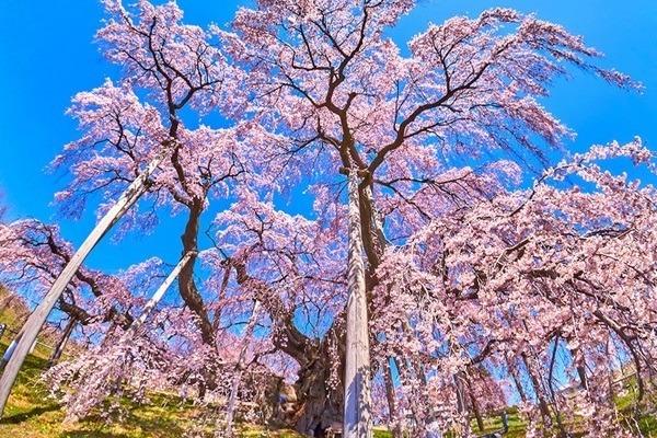 これが日本の春だ! 実際に行って選んだ東日本・桜の花見名所ベスト10