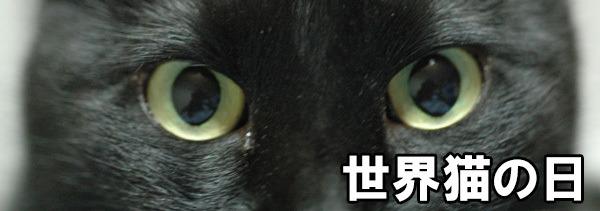 が 猫 荒い 鼻息