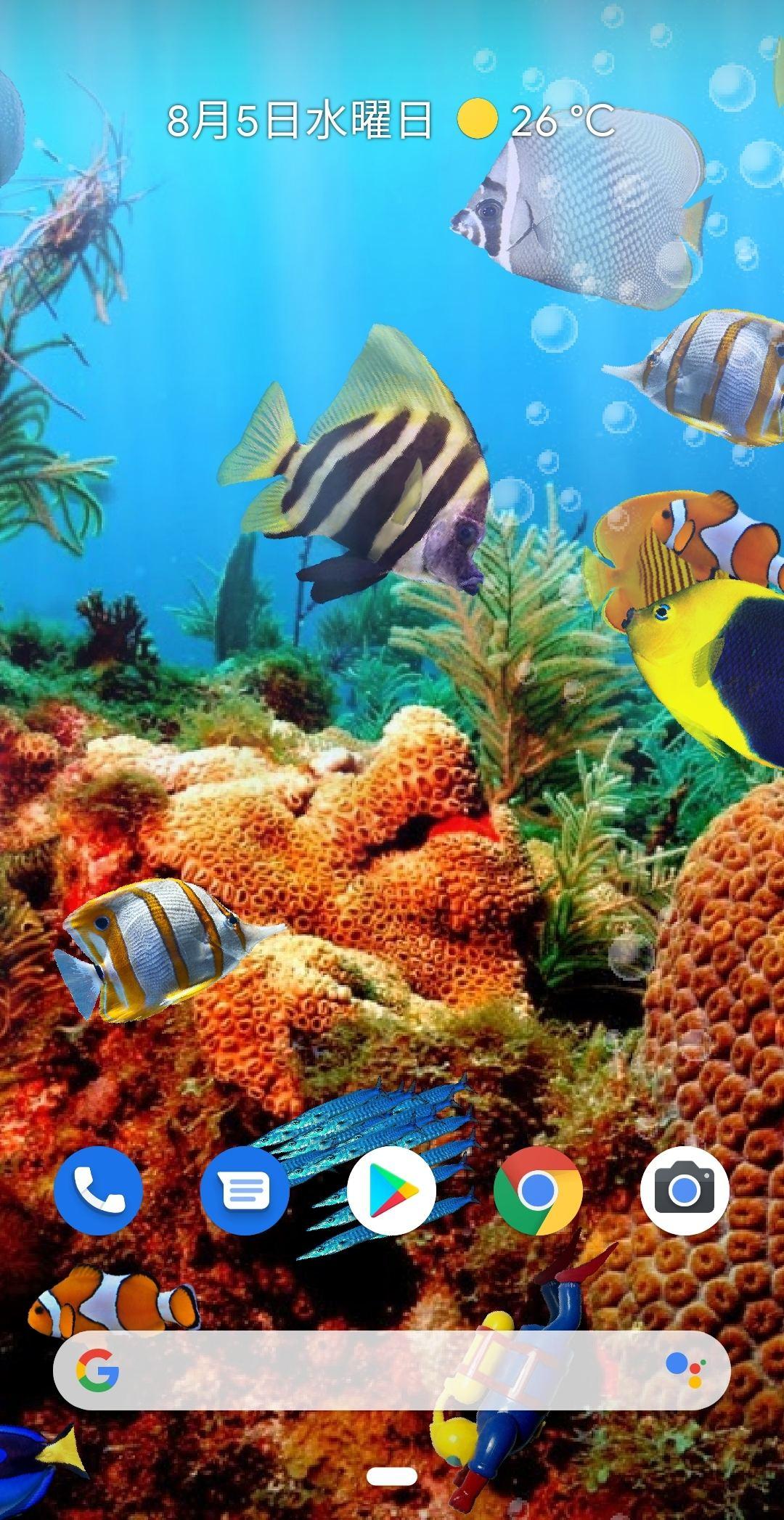 毎日がアプリディ 熱帯魚をスマホで飼う 本物の水槽 ライブ壁紙 マイナビニュース