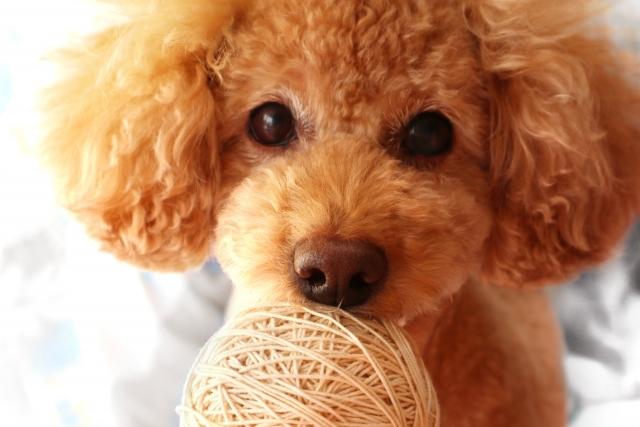 気になる犬は見つかりましたか?