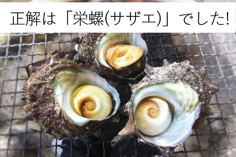 栄螺(さざえ)