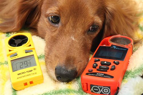 犬と家電とMacな日々 (8) 28度の温度設定は熱中症の危険領域だった? 風で効果的に予防する