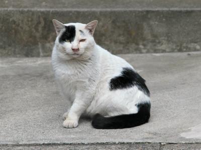 白黒猫写真