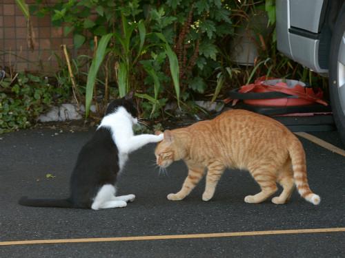 (=^・・^=)現在の猫の様子を報告するスレ82ヌコめYouTube動画>81本 ニコニコ動画>8本 ->画像>272枚