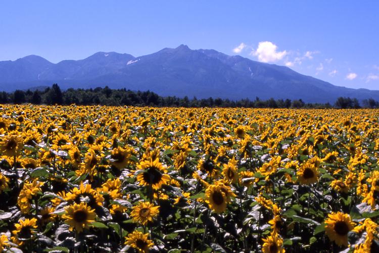 北海道上川町のふるさと納税の紹介!大自然で育った特産品を楽しもう
