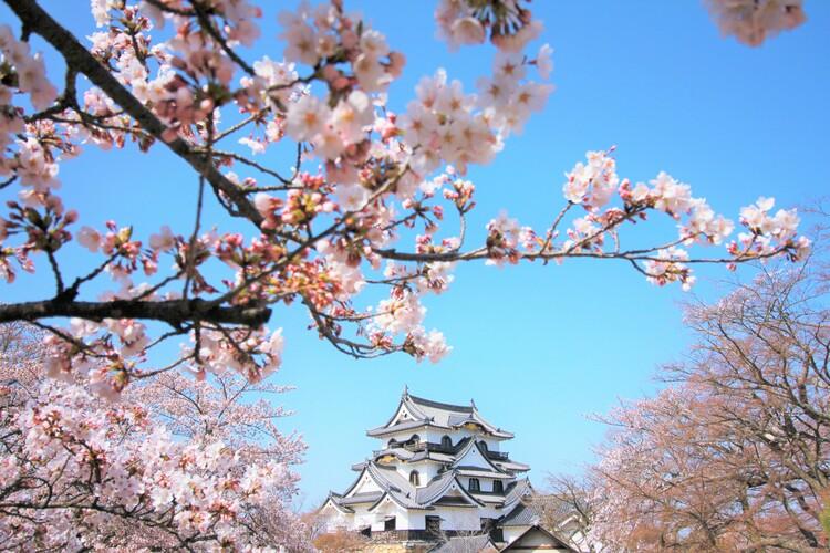 滋賀県彦根市にふるさと納税をしよう!街の魅力、返礼品を紹介