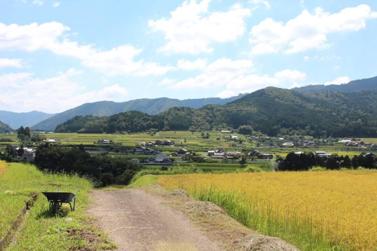 京都府京丹波町のふるさと納税を紹介!返礼品は丹波ブランド