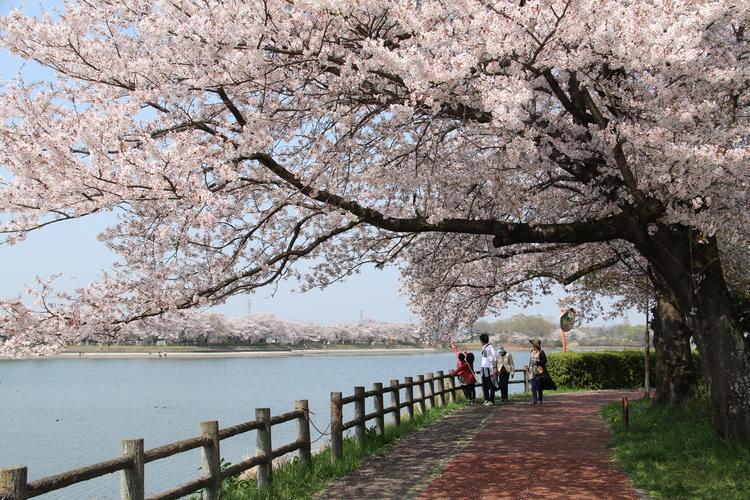 茨城県下妻市のふるさと納税を紹介!地元に愛される特産品がたっぷり