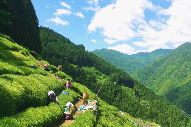 長野県天龍村のふるさと納税は大自然で育まれた美味しい返礼品が豊富