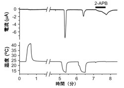 生理学研究所、進化によるTRPチャネルの機能変化を証明