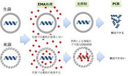 タカラバイオ、生きた病原性細菌のみを選択的に検出できるシステムを開発
