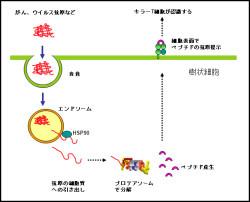 シャペロン 分子 総合生命科学部 生命システム学科