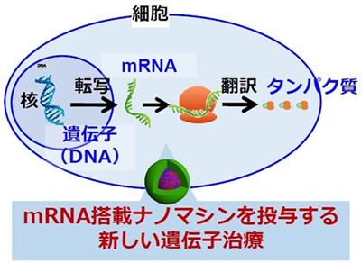 mRNA投与の治療にナノミセルで道開く