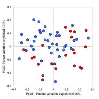 多発性硬化症、発症に特定の腸内細菌の減少が関与か - NCNP | マイナビニュース