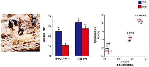 【京大】日本のアリが米国の森を襲っていると解明-カギは食性幅の拡大