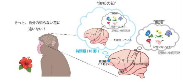 002 - 【医学】順天堂大学、「無知の知」を生み出す脳の仕組みを明らかに[18/01/27]