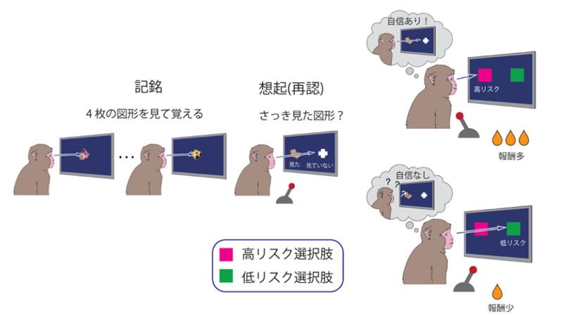 003 - 【医学】順天堂大学、「無知の知」を生み出す脳の仕組みを明らかに[18/01/27]
