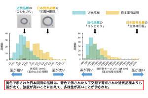 農工大、スーパー台風にも倒れないイネの茎を太く強くするゲノム領域を特定